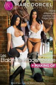 Die Hengste der Mademoiselle / Les Etalons de Mademoiselle