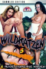 Wildkatzen 5
